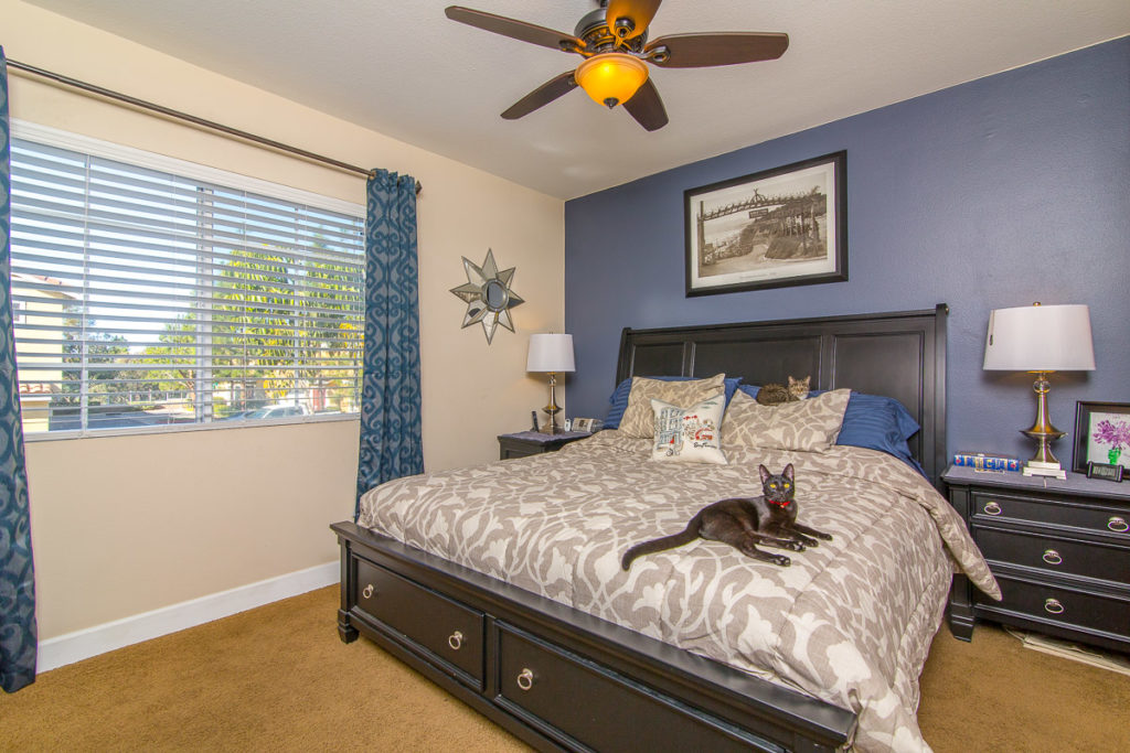 cats on a bed, real estate photography tips, cats